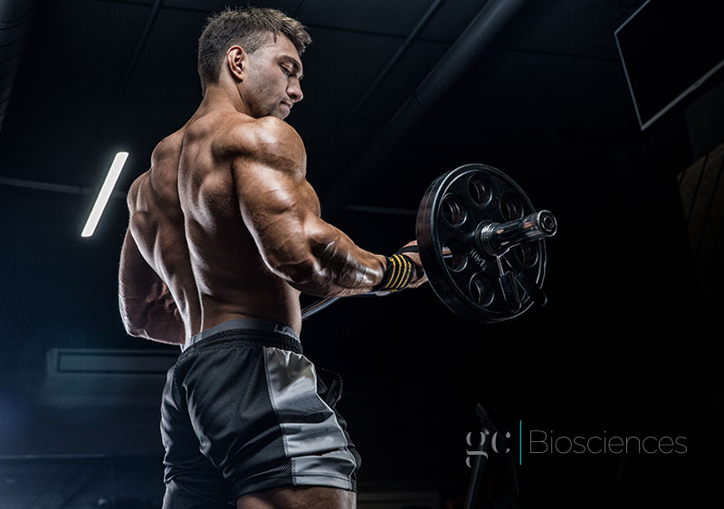 Protein Intake Research Suggests More for Bodybuilders